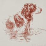 Springer Spaniel Bonzo in the pond again