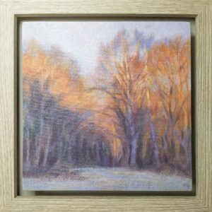 Sunlit trees, frosty morning, framed