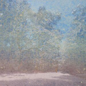 Hoar frost in trees