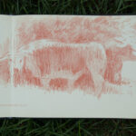 Drawings and studies by Mark Taylor sketchbook drawing of cattle on chorleywood common
