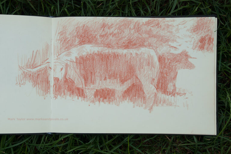 sketchbook drawing of cattle on chorleywood common